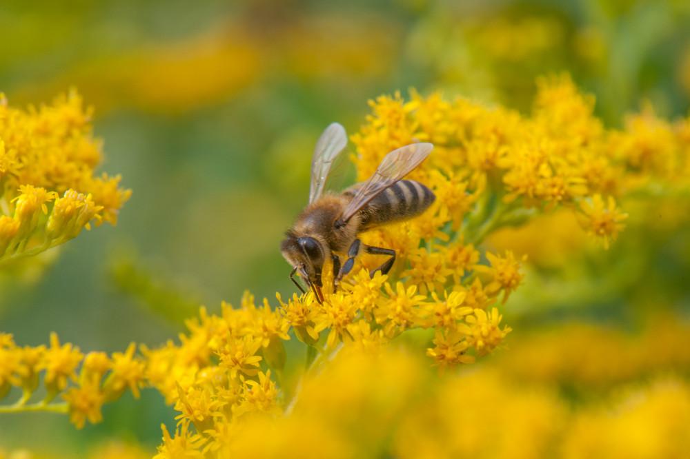 - Bienen Blume Insekt Insekten Natur Pflanze Tier Tiere
