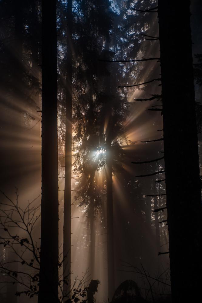 Sonnenlicht bricht sich im Wald - Admonter Haus Almhütte Bauwerke Buchau Dunkel Ennstal Ennstaler Alpen Europa Gesäuse Haller Mauern Highlight Hochformat Hütten Natur Nebel Steiermark Xeis schwarz Österreich