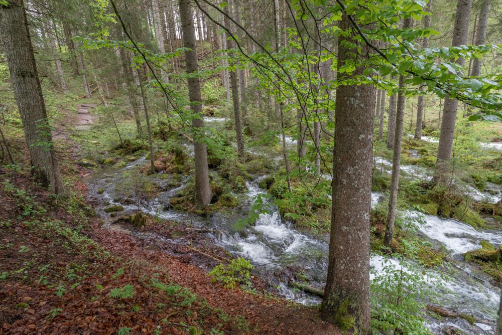 - Ausseerland Bad Mitterndorf Baum Bildinhalt Europa Gewässer Holz Kainisch Mühlreith Natur Pflanze Pichl Kainisch Salzkammergut Steiermark Strumern Strummen Strummern Wald Wasser Wasserfall Österreich