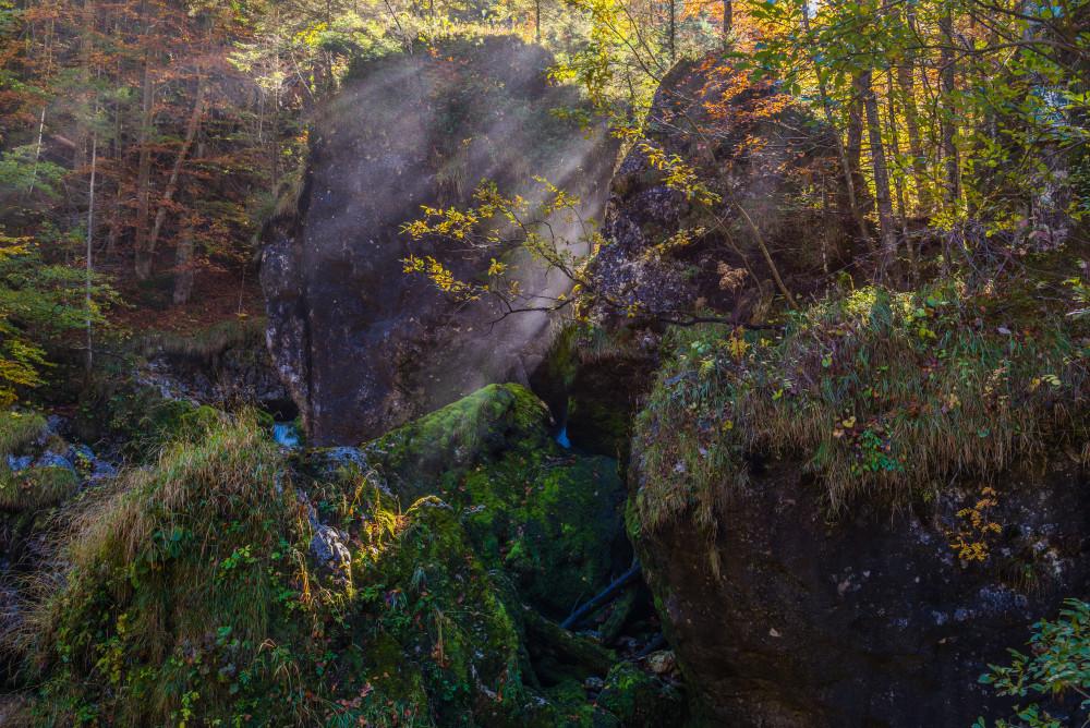 - Baum Dunkel Ennstal Europa Gesäuse Hartelsgraben Herbst Holz Jahreszeit Jahreszeiten Natur Pflanze Steiermark Wald Xeis schwarz Österreich