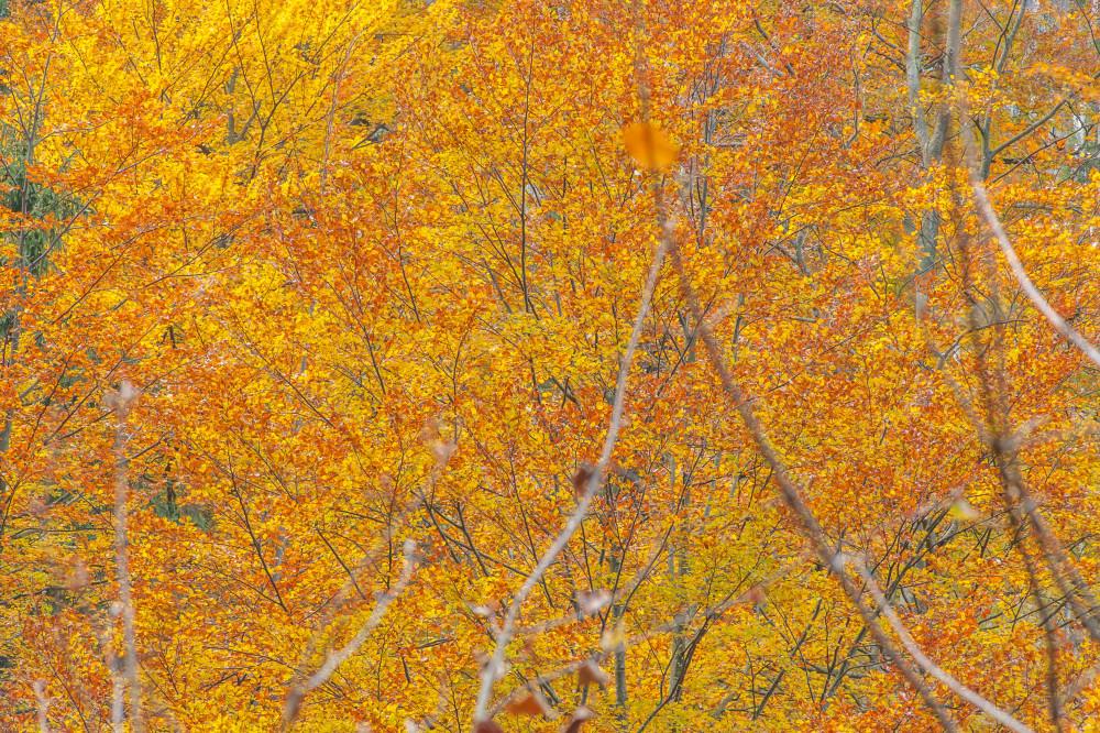 - Baum Ennstal Europa Gesäuse Hartelsgraben Herbstlaub Holz Indian Summer Kontrastarm Natur Pflanze Steiermark Textur Xeis braun gelb Österreich