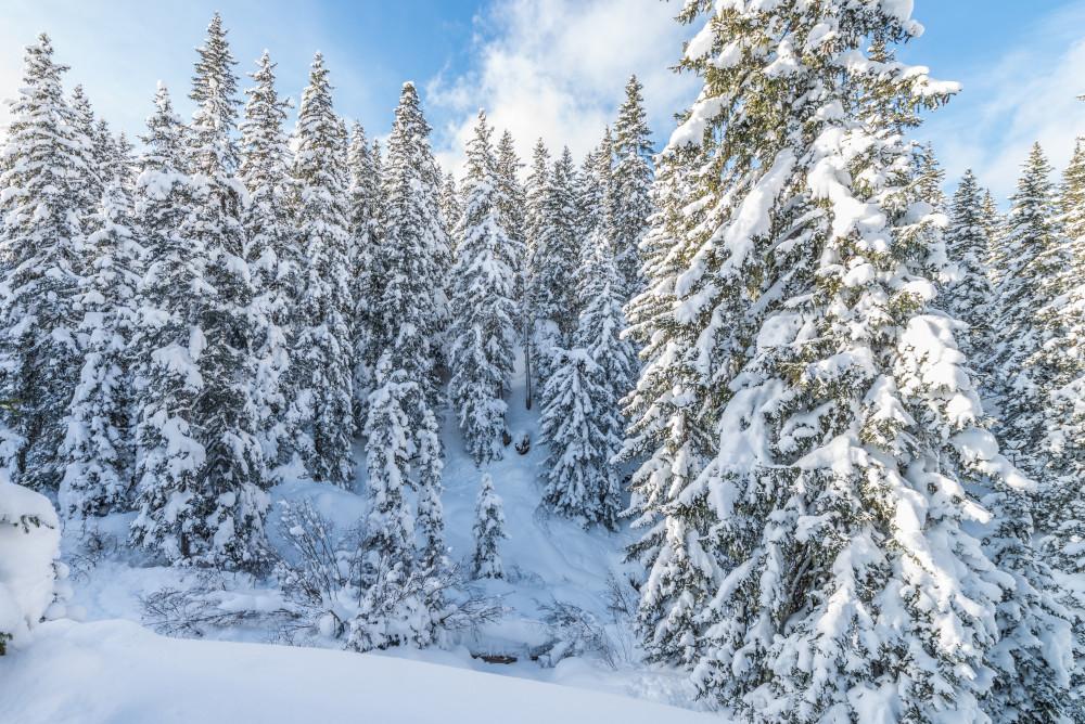- Europa Hell Jahreszeit Jahreszeiten Natur Outdoor Pflanze Planneralm Schnee Steiermark Wandern Winter Wölzer Tauern grau Österreich