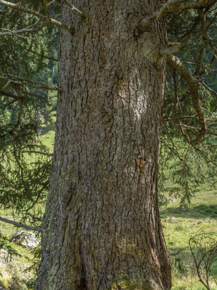 - Alm Almen Baum Bäume Dunkel Europa Fichte Gewässer Hochformat Holz Jägeralm Kleinsölk Natur Pflanze Schwarzensee See Steiermark Sölktal Sölktäler Wald Österreich