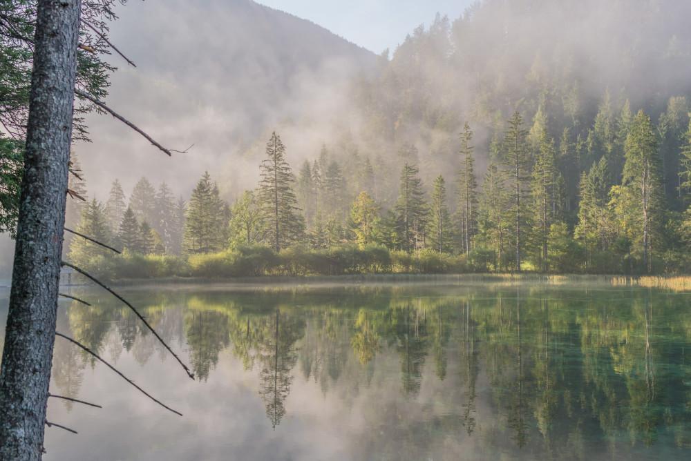 - Baum Bildeigenschaft Bildinhalt Gewässer Hinterstoder Holz Natur Pflanze Pyhrn Priel Pyhrn-Priel Schiederweiher See Sommer Stodertal Ungesättigt Wald Wasser grau