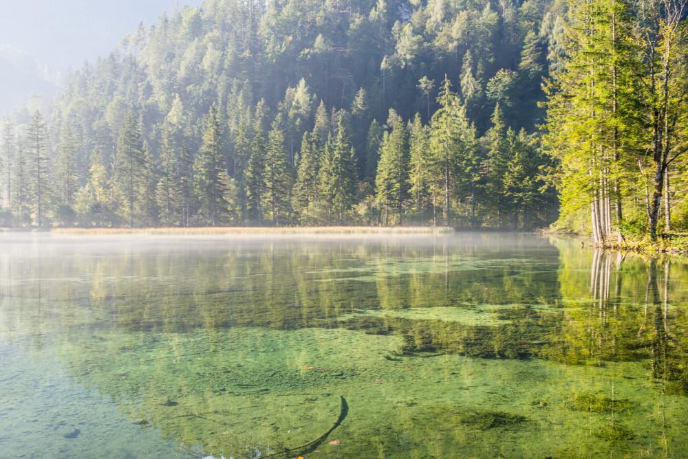 - Baum Bildeigenschaft Bildinhalt Gewässer Hinterstoder Holz Natur Pflanze Pyhrn Priel Pyhrn-Priel Schiederweiher See Stodertal Ungesättigt Wald Wasser grau