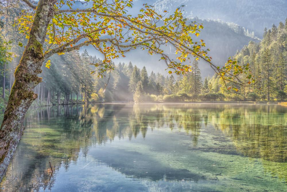 - Baum Bildinhalt Birke Bäume Gewässer Hinterstoder Natur Pflanze Pflanzen Pyhrn Priel Pyhrn-Priel Schiederweiher See Sommer Stodertal Wasser