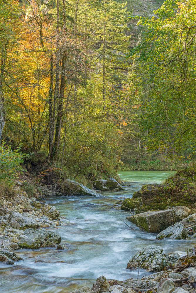 - Baum Bildinhalt Europa Fluss Gewässer Herbst Hochformat Holz Jahreszeit Jahreszeiten Natur Palfau Pflanze Salza Salzatal Steiermark Wald Wasser Wasserlochklamm Österreich