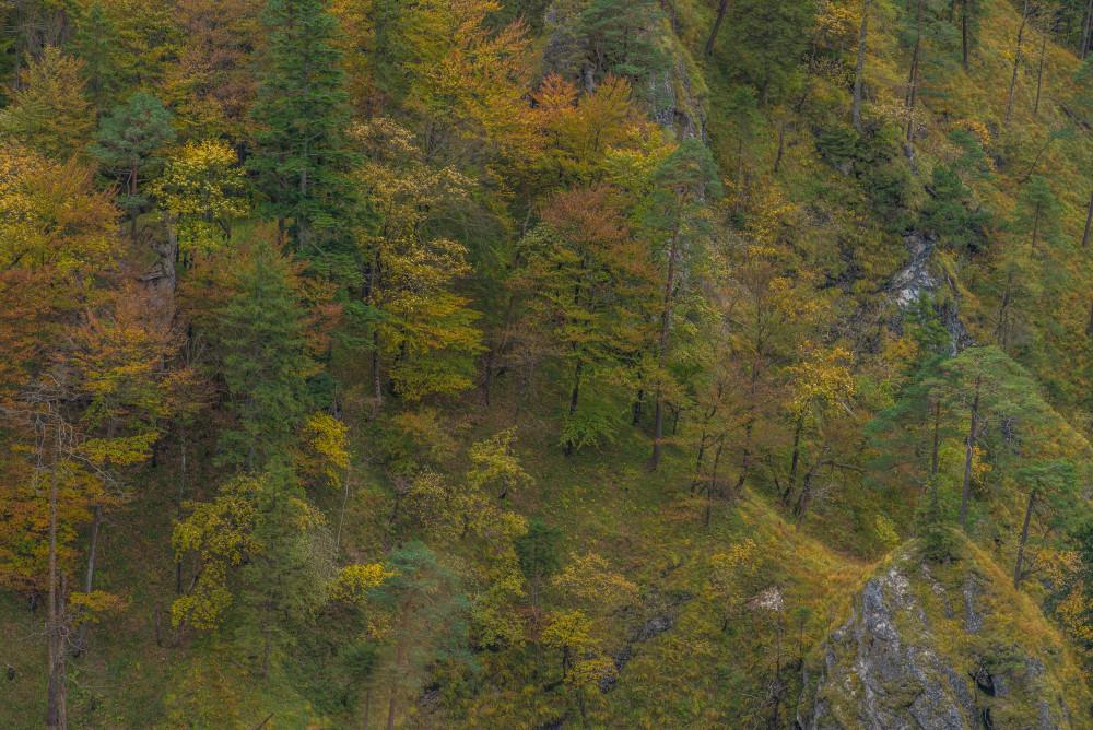 - Baum Bildeigenschaft Bildinhalt Bäume Dunkel Europa Holz Kontrastarm Natur Palfau Pflanze Pflanzen Salzatal Steiermark Wald Wasserlochklamm Österreich