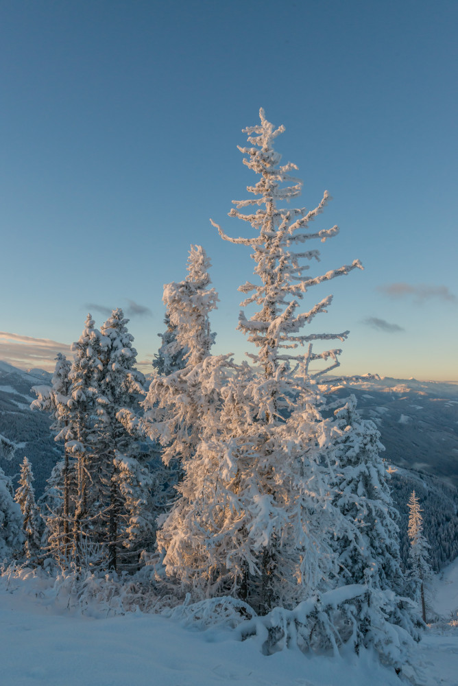 - Baum Berg Ennstal Herbst Highlight Hochformat Hohe Trett Holz Jahreszeit Jahreszeiten Natur Pflanze Schnee Winter grau