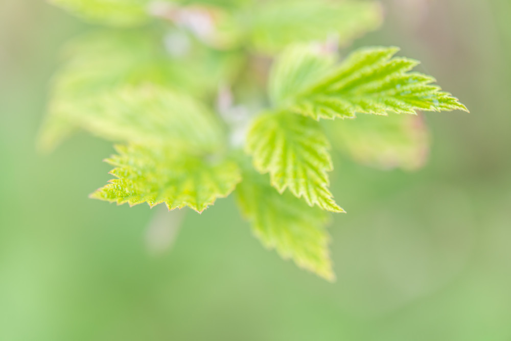 - Bokeh Frühling Hell Jahreszeit Jahreszeiten Natur Pflanze Stockfoto