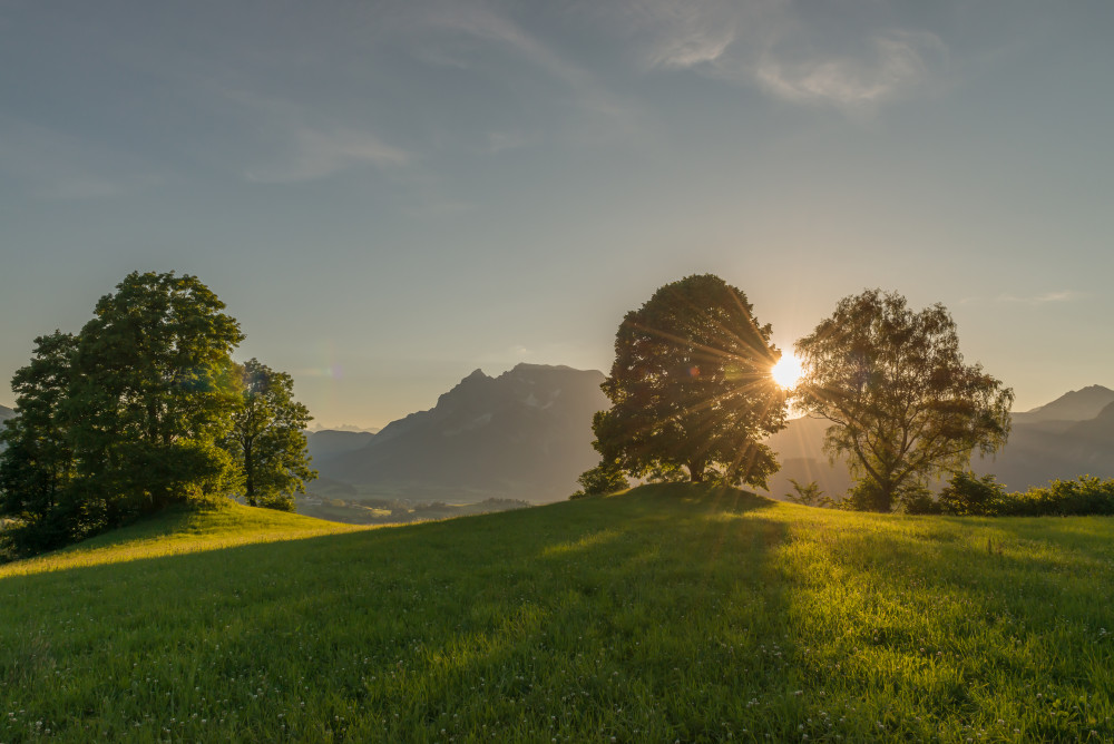 Sonnenuntergang in Vorberg (Ennstal) - Baum Berg Grimming Grimming-Donnersbachtal Hochhuberhof Hochland Linde Lindenbaum Natur Pflanze Sonne Sonnenuntergang Wiese