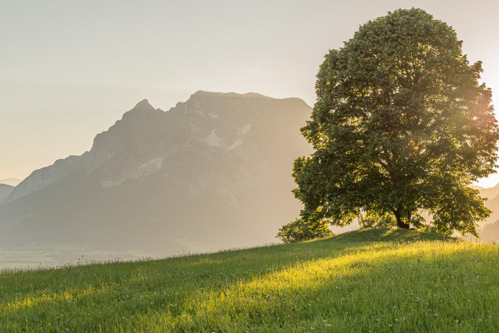 - Aigen im Ennstal Baum Berg Ennstal Europa Grimming Hochhuberhof Holz Linde Lindenbaum Natur Pflanze Sonne Sonnenuntergang Steiermark Wiese Österreich
