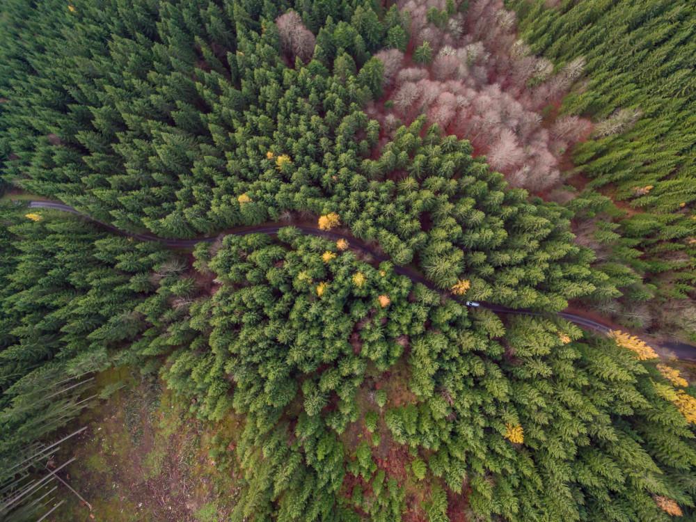 - Baum Dunkel Gemüse Highlight Holz Kontrastarm Lebensmittel Luftaufnahme Luftbild Natur Pflanze Romanesco grau