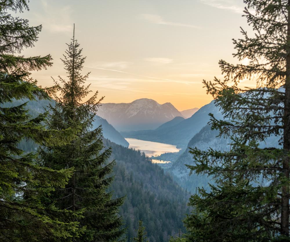 der 3-Seen-Blick, hoch über dem Toplitzsee - Ausseerland Baum Bildeigenschaft Europa Grundlsee Holz Kontrastreich Natur Pflanze Salzkammergut Steiermark Ungesättigt drei Seen Blick dreiseenblick schwarz weiß Österreich