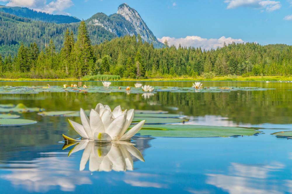 Seerosen am Spechtensee - Blumen Fahrzeug Gewässer Kanu Natur Nymphaea Pflanzen See Seerose Sommer Spechtensee Wasser