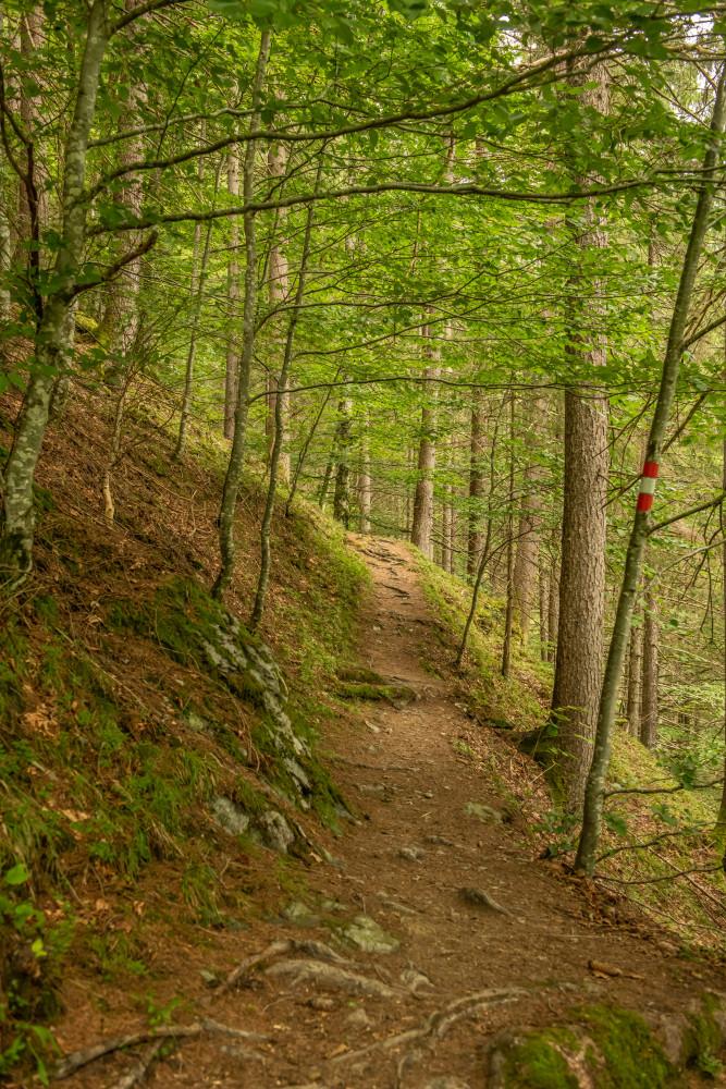 in der Donnersbachklamm - Baum Donnersbachklamm Dunkel Grimming-Donnersbachtal Hochformat Holz Natur Pflanze