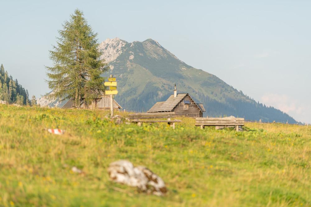 - Alm Almen Ennstal Europa Hell Hinteregg Hinteregger Alm Hintereggeralm Hochland Liezen Natur Steiermark Wiese Österreich