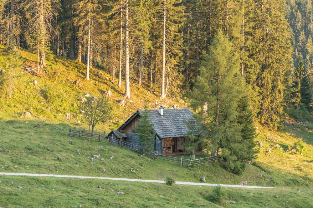 Hinteregger Alm - Alm Almen Baum Ennstal Europa Hinteregg Hinteregger Alm Hintereggeralm Holz Liezen Natur Pflanze Sommer Steiermark Wald Österreich