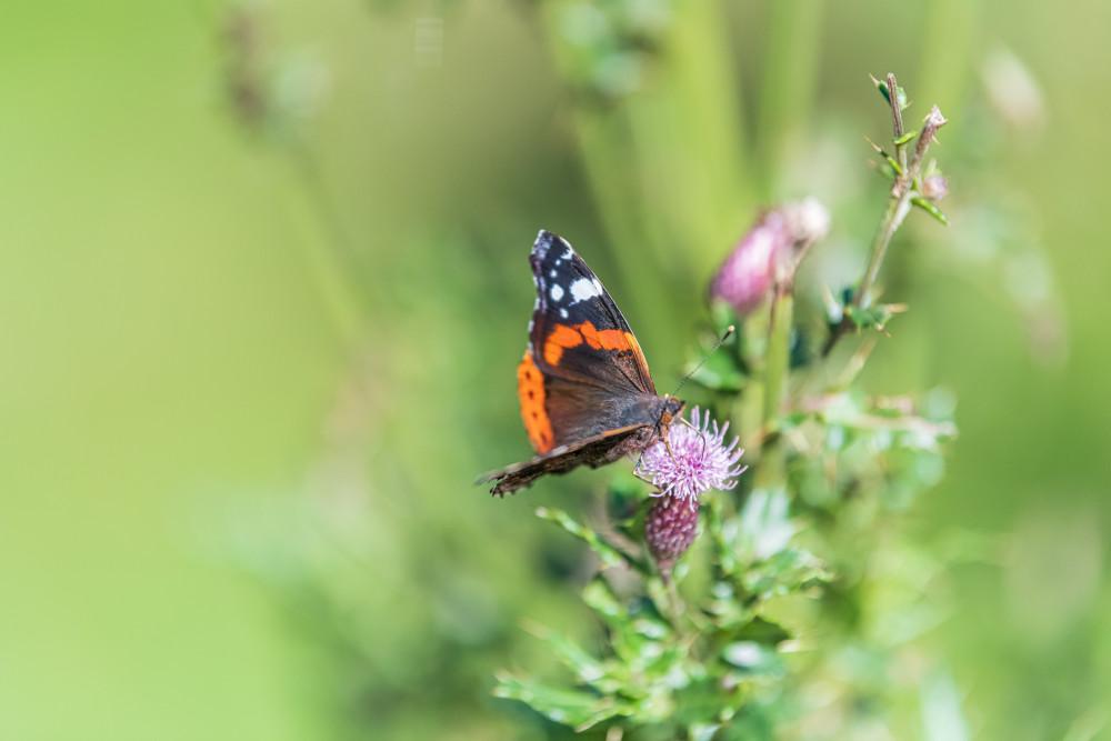 - Hell Insekt Schmetterling Tier gelb