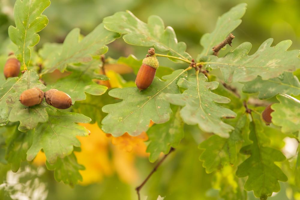 - Bildeigenschaft Blatt Farbenfroh Natur Pflanze gelb grün