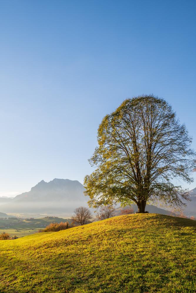 - Baum Grimming-Donnersbachtal Herbst Highlight Hochformat Hochhuberhof Holz Jahreszeit Jahreszeiten Linde Lindenbaum Natur Pflanze Vorberg blau