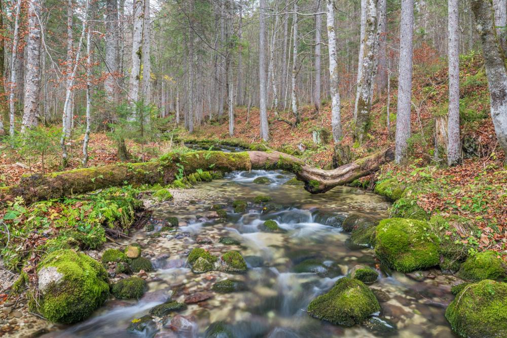 der Sagtümpelbach - Ausseerland Bach Baum Bäume Europa Fluss Gewässer Holz Natur Pflanze Sagtümpelbach Salzkammergut Steiermark Tauplitz Wald Wasser grau Österreich