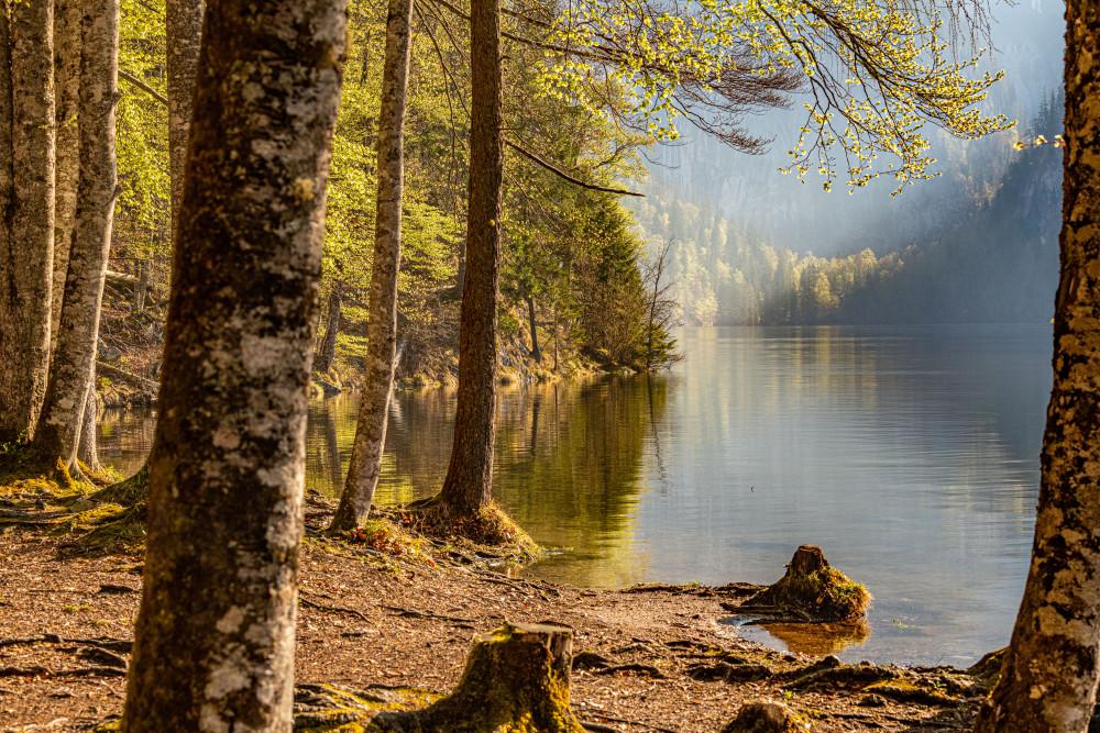 Rund um den Toplitzsee - Ausseerland Baum Bildeigenschaft Europa Grundlsee Holz Natur Pflanze Salzkammergut Steiermark Toplitzsee Ungesättigt Wald grau Österreich