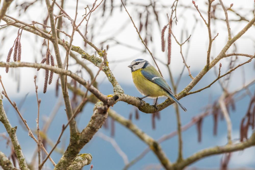 - Hell Jahreszeit Jahreszeiten Meise Natur Pflanze Tier Vogel Wildlife Winter