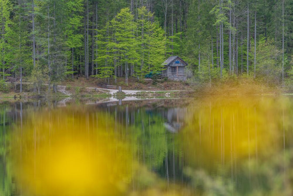 Am Ödensee - Ausseerland Baum Europa Gewässer Holz Kontrastarm Natur Pflanze Salzkammergut See Steiermark Wald Wasser Ödensee Österreich