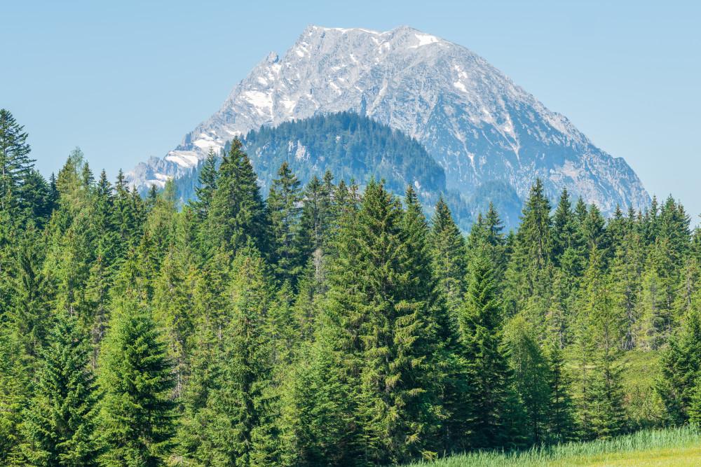- Baum Berg Bildeigenschaft Ennstal Europa Holz Kontrastreich Natur Pflanze Steiermark Tausing Wald Wörschach Wörschachberg Österreich