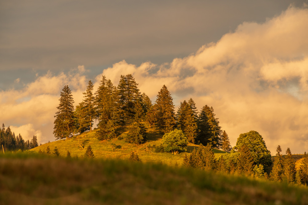 - Aigen im Ennstal Baum Ennstal Europa Himmel Holz Natur Pflanze Stalingradkreuz Steiermark Wiese Wolken braun Österreich