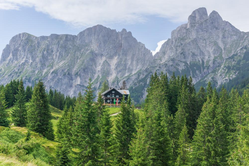- Baum Berg Bildinhalt Ennstal Europa Gesäuse Hochland Holz Mödlinger Hütte Mödlingerhütte Natur Pflanze Reichenstein Steiermark Wald Xeis Österreich