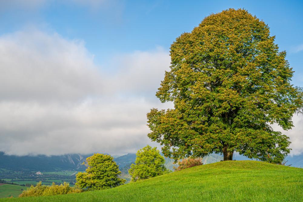 Die Linde am Hochhuberhof - Bauernhof Baum Feld Gegenlicht Grimming-Donnersbachtal Himmel Hochhuberhof Holz Landwirtschaft Linde Lindenbaum Natur Pflanze Pflanzen Vorberg Wiese Wolken