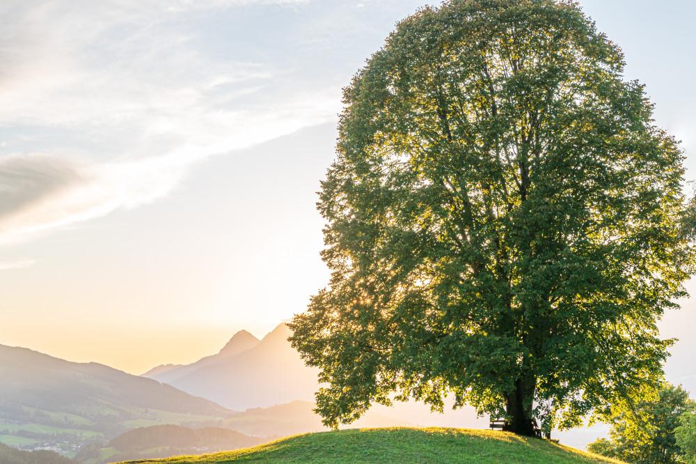 - Bauernhof Baum Berg Bildeigenschaft Bildinhalt Gegenlicht Grimming Grimming-Donnersbachtal Hochhuberhof Holz Kontrastreich Linde Lindenbaum Natur Pflanze Pflanzen Vorberg weiß
