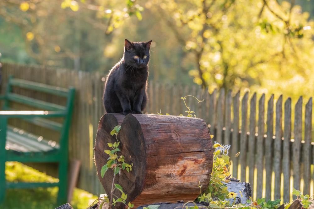 rund um den Hochhuberhof in Vorberg - Aigen im Ennstal Ennstal Europa Haustier Hochhuberhof Katze Primat Steiermark Tier Vorberg grau Österreich