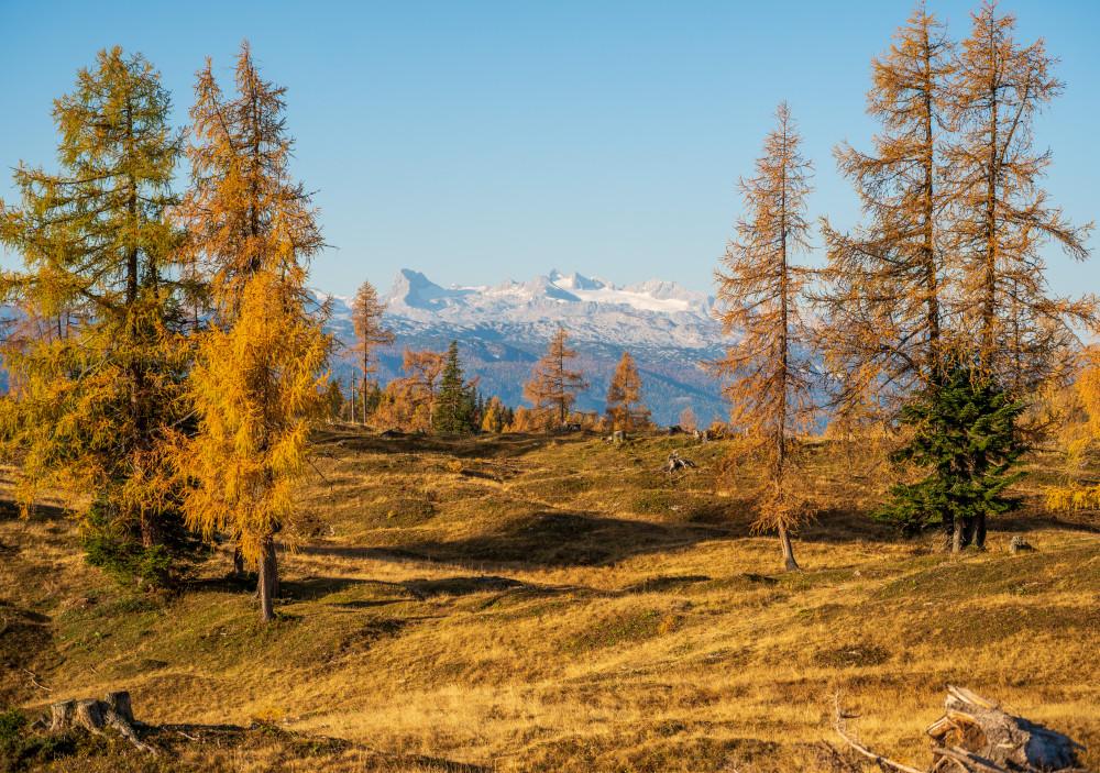 - Alm Almen Baum Bildinhalt Dachstein Europa Herbst Highlight Holz Jahreszeit Jahreszeiten Natur Pflanze Salzkammergut Steiermark Tauplitz Tauplitz Alm Tauplitzalm braun Österreich
