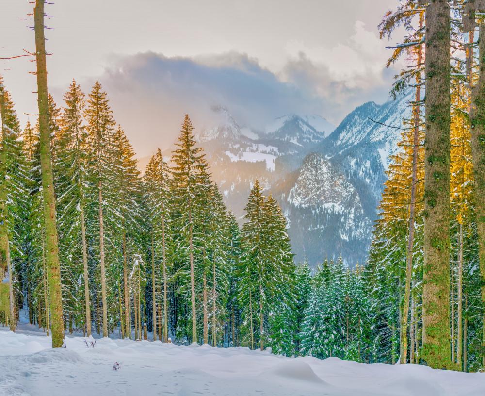 - Alm Almen Hinteregg Hinteregger Alm Jahreszeit Jahreszeiten Lichtstimmung Natur Schnee Wald Winter Winterlandschaft