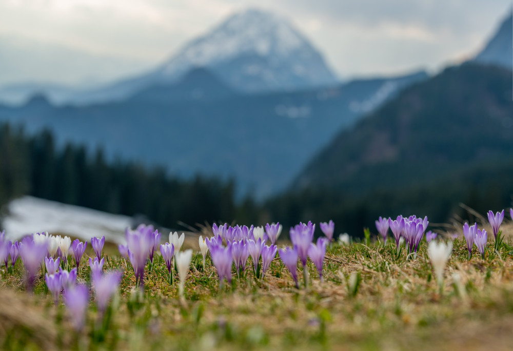 - Alm Almen Excire (de)* Berg Himmel Hingeregger Alm Hinteregg Hintereggeralm Hochland Kontrastreich Natur Pflanze Wiese Wolken