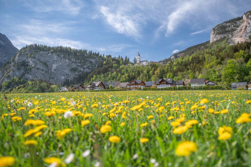 - Blumen Ennstal Europa Kirche Kripperl der Steiermark Löwenzahn Natur Pflanzen Pürgg Steiermark Trautenfels Unterburg Wiese Österreich