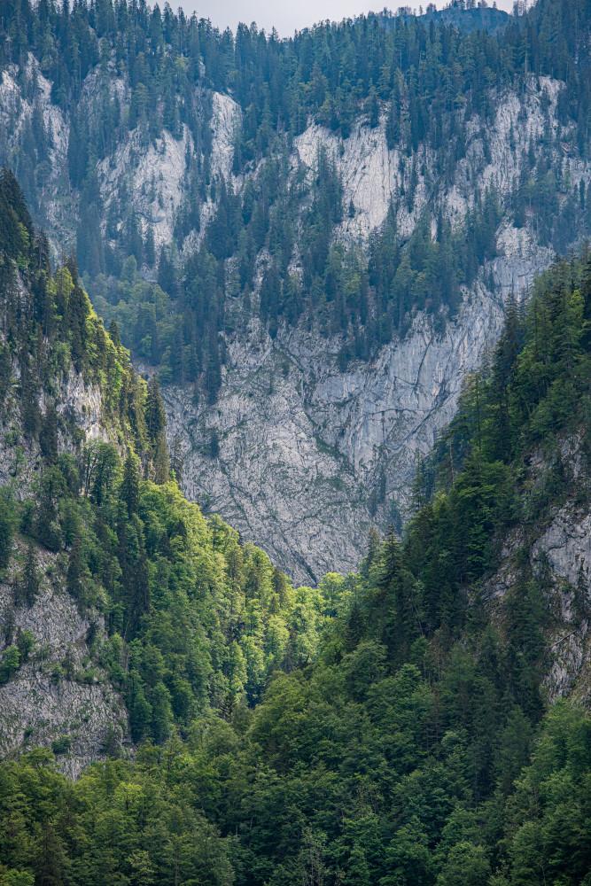 - Ausseerland Baum Europa Holz Natur Pflanze Salzkammergut Steiermark Toplitzsee Ungesättigt Wald Österreich