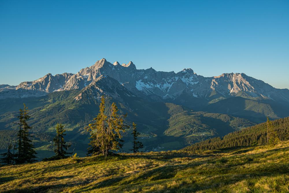 Blick vom Rossbrand in die Dachsteinsüdwand - Baum Berg Dachstein Dachsteinsüdwand Europa Holz Natur Pflanze Pongau Radstadt Rossbrand Salzburg Steiermark Österreich