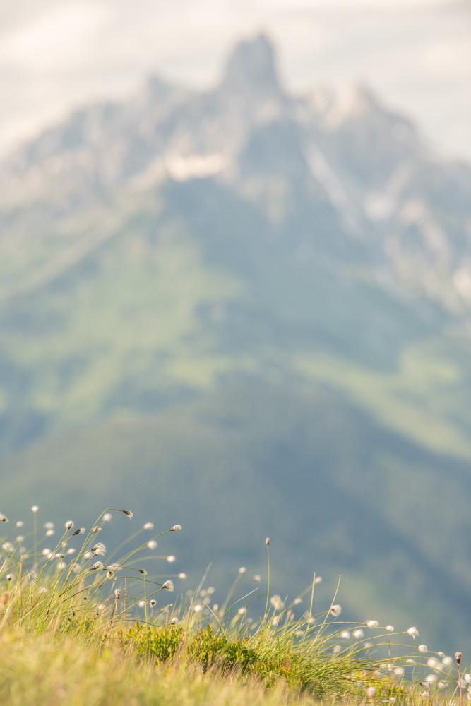 Wollgras am Roßbrand, Bischofsmütze im Hintergrund - Hell Himmel Natur Wolken